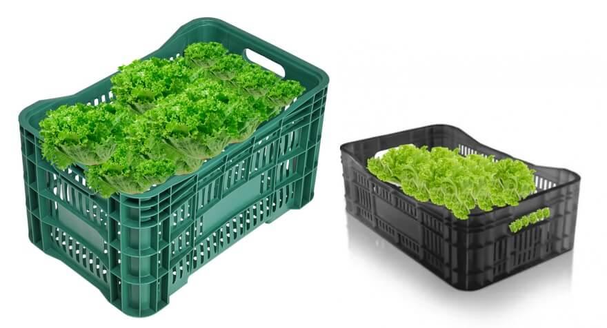 Caixa Plastica para alface